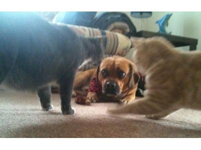 Khi mèo và chó sống chung, thì chúng nó sẽ như thế nào nhỉ?