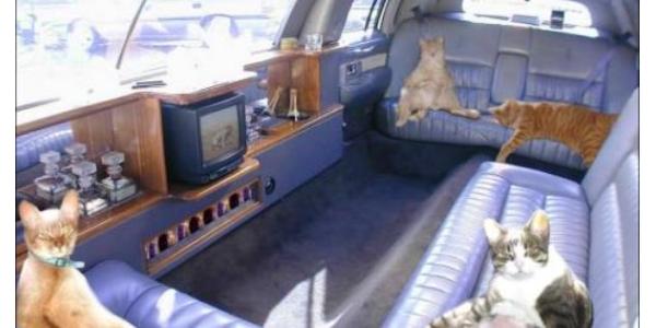 Chàng trai 'chơi lớn' bỏ gần 3 triệu thuê Limousine chở 2 mèo cưng về quê ăn Tết khiến nhiều người trầm trồ.